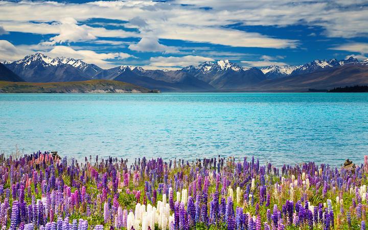 Der Lake Tekapo auf der Südinsel von Neuseeland © Pichugin Dmitry / shutterstock.com
