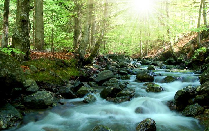 Bayerischer Wald © Vaclav Volrab / shutterstock.com