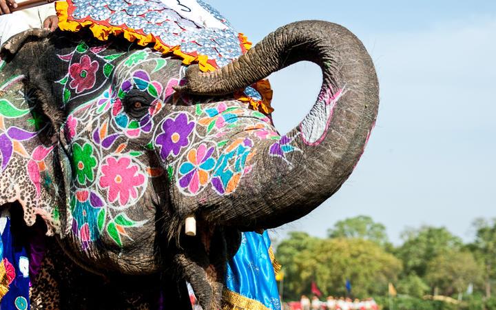 Bemalter Elefant beim jährlich im März stattfindenden Elephant Festival in Jaipur, Rajasthan, Indien © RuthChoi / Shutterstock.com