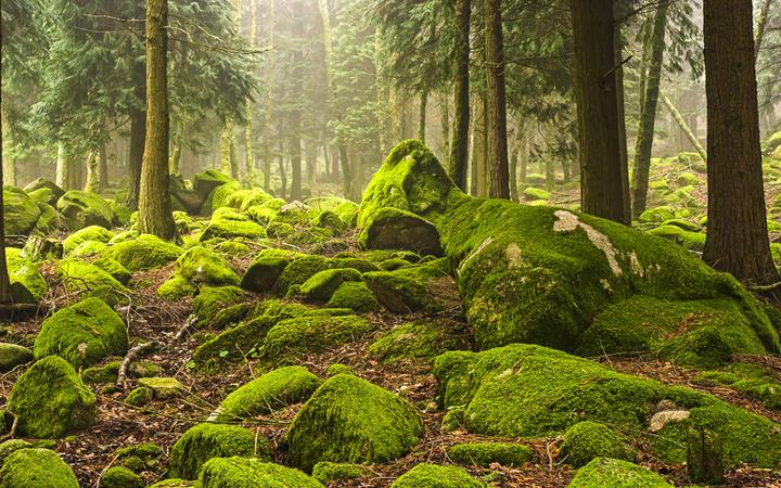 Mystische Waldlandschaft im Nationalpark von Peneda in Geres, Portugal © Zacarias Pereira da Mata / Shutterstock.com