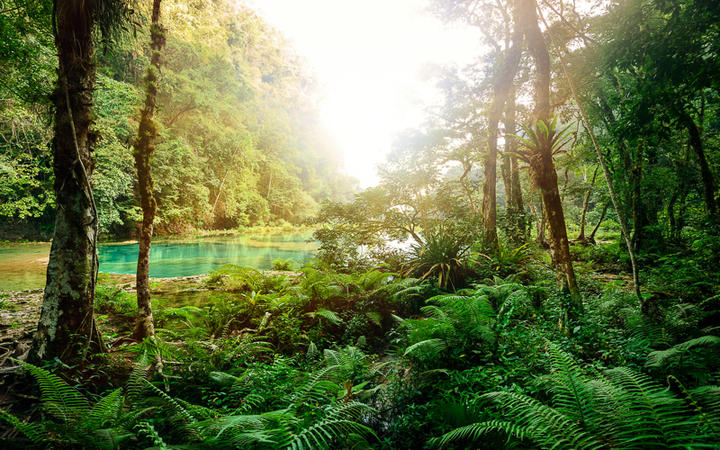 Mysteriöser Maya-Jungle im Nationalpark Semuc Champey, Guatemala © soft_light / Shutterstock.com