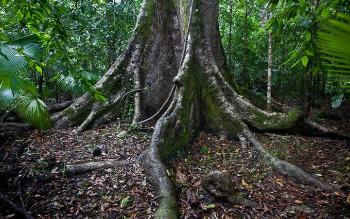 Nationalpark Tangkoko © Ethan Daniels / shutterstock.com
