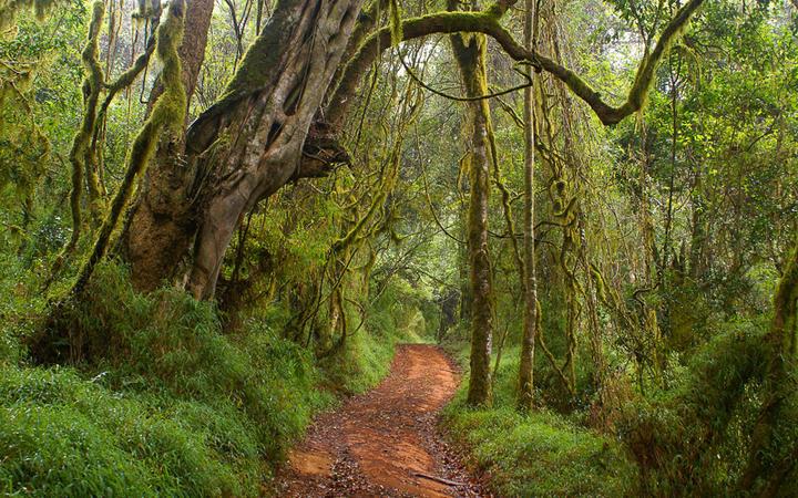 Wolkenwald in Limpopo © Elzbieta Sekowska / shutterstock.com
