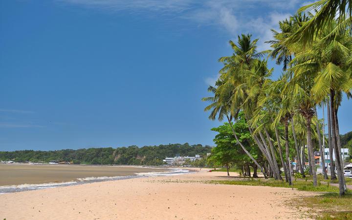Kokosnusspalmen und feiner Sandstrand in Joao Pessoa, Paraiba, Brasilien © Vitoriano Junior / shutterstock.com